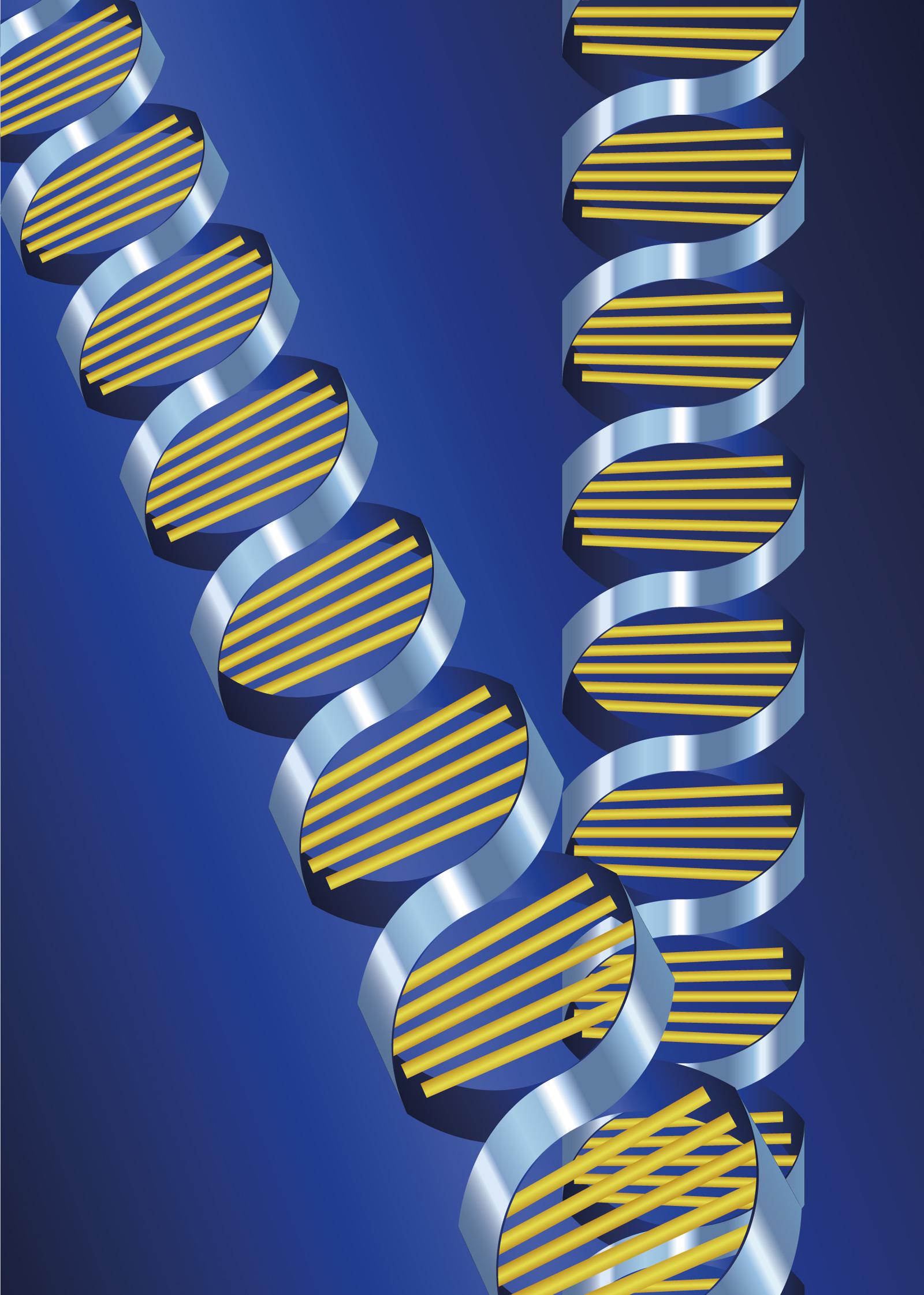 遺伝子を活かす方法について